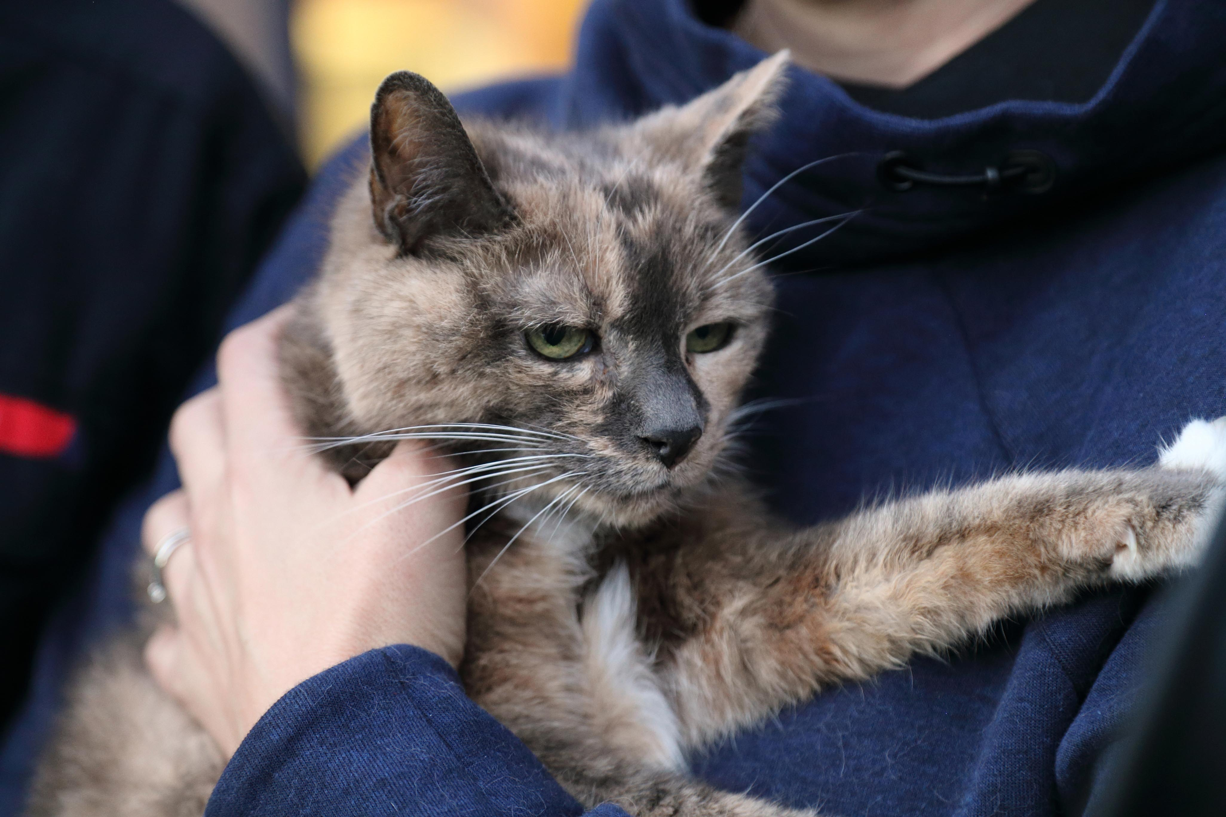 Eight lives left for Harriet - first animal in Shropshire to be revived by firefighters using the new pet oxygen masks after a house fire