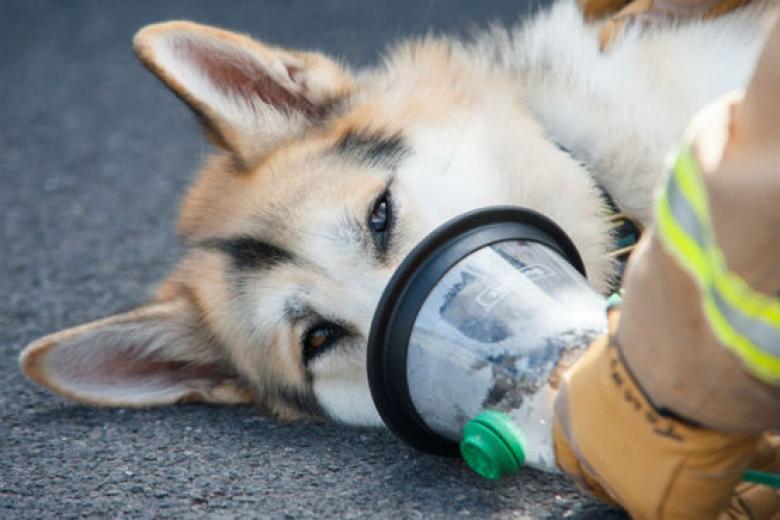 dog wearing oxygen mask