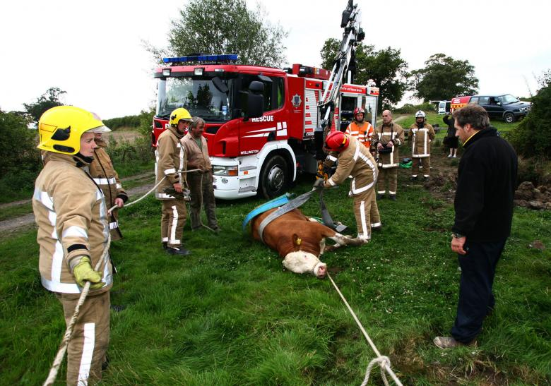 Wellington firefighters rescue a bull from a sunken well. They need more firefighter crew to cover such daytime rescues.